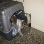 Travel kennel for two dogs