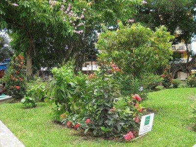 el centro, David, Panama