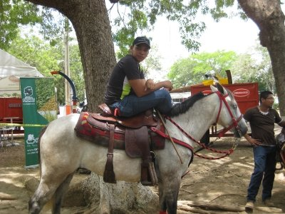 Azuero Fair horses and ponies