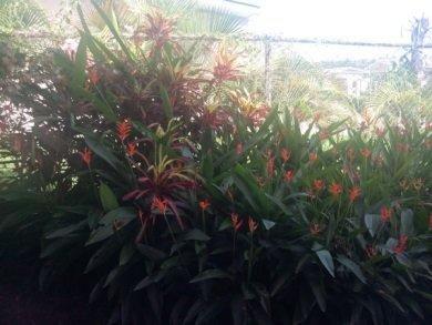 flowers outside my office window
