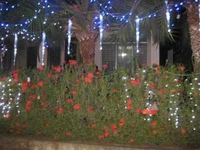 image of Christmas Decorations in Las Tablas, Panama