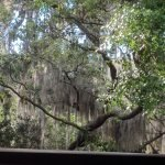 Spanish Moss from my porch