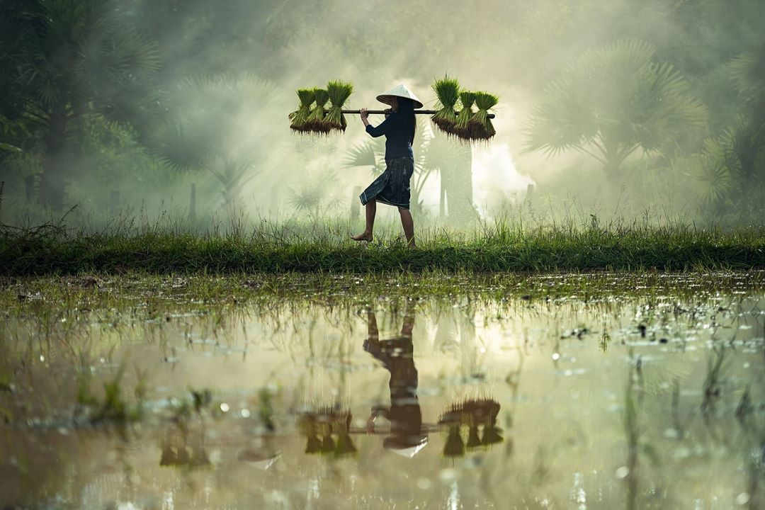 Isnt this a stunning picture of a Malaysian farmer? Thishellip