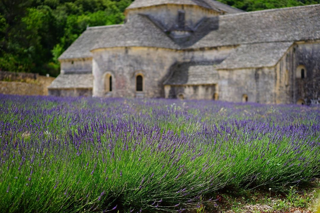 French lavender fields are the best lavender france provence hellip